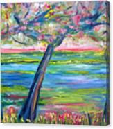 Tidal Marsh View Canvas Print