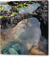 Tidal Pool Canvas Print