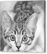 Tiddles Canvas Print