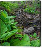 Tierney Springtime - New England Forest Canvas Print