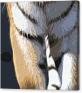 Tiger 16 Pano Canvas Print