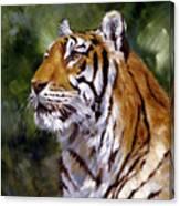 Tiger Alert Canvas Print