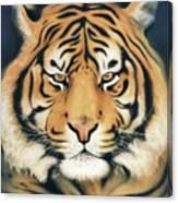Tiger At Midnight Canvas Print