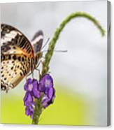 Tiger Butterfly Perched On A Flower Canvas Print