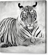 Tiger Cub At Rest Canvas Print