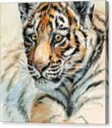 Tiger Cub Portrait 865 Canvas Print