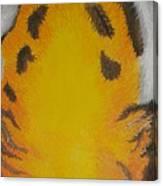 Tiger Eyes Canvas Print