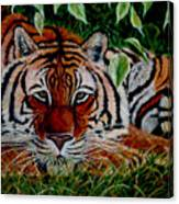 Tiger In Jungle Canvas Print