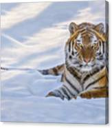 Tiger In The Snow Canvas Print