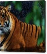 Tiger Land Canvas Print