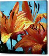 Tiger Lilies After The Rain - Painted Canvas Print