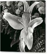 Tiger Lily Orchid  2 Canvas Print