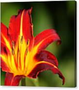 Tiger Lily0078 Canvas Print