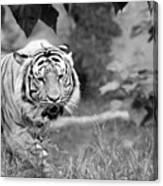 Tiger Love Canvas Print