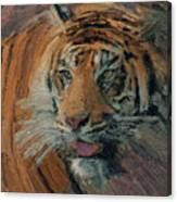 Tiger On Hunting Canvas Print