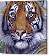 Tiger Portrayal Canvas Print