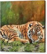 Tiger Repose Canvas Print