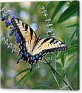 Tiger Swallowtail 1 Canvas Print