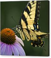 Tiger Swallowtail 1 Canvas Print