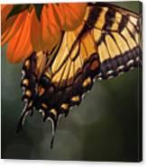 Tiger Swallowtail - 2 Canvas Print