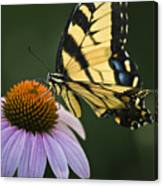 Tiger Swallowtail 2 Canvas Print