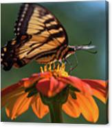 Tiger Swallowtail - 3 Canvas Print