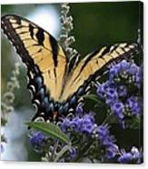 Tiger Swallowtail 3 Canvas Print