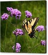 Tiger Swallowtail Among The Verbena   Canvas Print