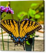 Tiger Swallowtail Butterfly By Fence Canvas Print