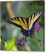 Tiger Swallowtail Painting Canvas Print