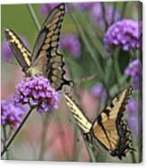 Tiger Swallowtails Canvas Print