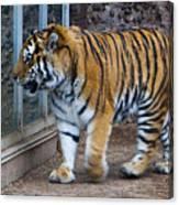 Tiger Territory 4 Canvas Print