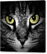 Tiger Tiger 3 Canvas Print
