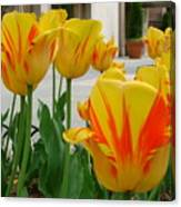 Tiger Tulips Canvas Print