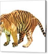 Tiger White Background Canvas Print