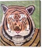 Tigerish Canvas Print