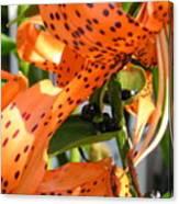 Tigerlilies Canvas Print