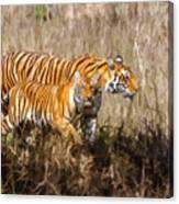 Tigers Burning Bright Canvas Print
