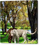 Tigers By The City Canvas Print