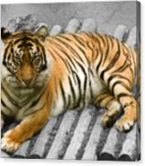 Tigers Look Canvas Print