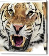 Tigers Pace Canvas Print