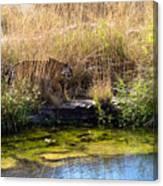 Tigress By The Stream Canvas Print