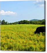 Til The Cows Come Home Canvas Print