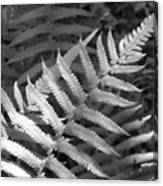Tilted Fern Canvas Print