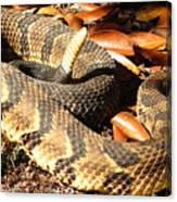 Timber Rattlesnake Horizontal Canvas Print