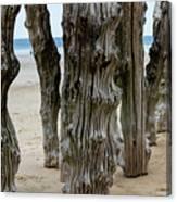 Timber Textures Lv Canvas Print