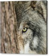 Timber Wolf Picture - Tw285 Canvas Print