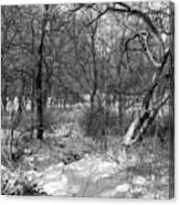 Timberland Infrared No3 Canvas Print