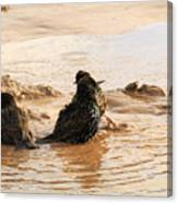 Time For A Mud Bath Canvas Print