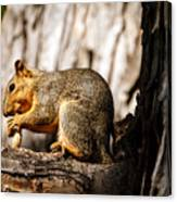 Time For A Peanut Canvas Print